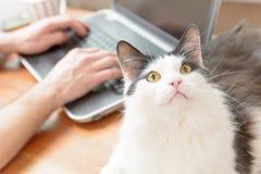 Équipez le travail au bureau avec son chat Photo libre de droits