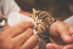 Équipez les mains alimentant le lait de la bouteille au petit chaton Photo stock