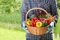 Équipez les mains jugeant un panier plein des légumes Photographie stock