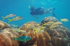 Équipez naviguer au schnorchel dans un récif coralien et une école des poissons Images stock