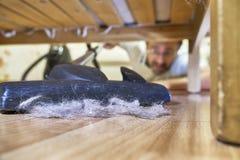 Équipez nettoyer un plancher sous un lit avec l'aspirateur Photo stock