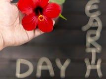 Équipez tenir la fleur rouge de ketmie sur le fond brouillé Concept d'écologie Concept de jour de terre photos stock
