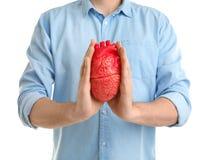 Équipez tenir le modèle du coeur sur le fond blanc Photos libres de droits