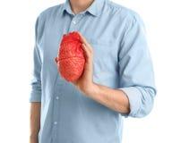 Équipez tenir le modèle du coeur sur le fond blanc Photo stock