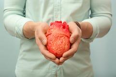 Équipez tenir le modèle du coeur sur le plan rapproché léger de fond Concept de crise cardiaque Image stock