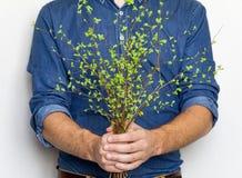 Équipez tenir un groupe de branches vertes de ressort Concept élégant lumineux de photo, d'eco et d'amour Photo libre de droits
