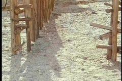 Équipez vivre en troupe des chèvres dans le corral banque de vidéos