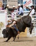 Équitation de Bull - soeurs, pro rodéo 2011 de l'Orégon PRCA Images stock