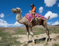 Équitation de garçon à cheval sur Bactrian Images libres de droits