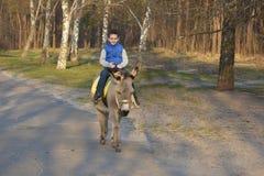 Équitation de garçon sur un âne sur la route Photographie stock libre de droits