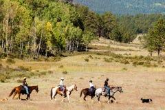 Équitation de Horesback image libre de droits