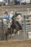 Équitation de San Dimas Bull Image stock