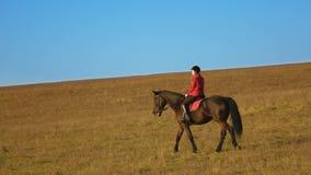 Équitation femelle de cavalier un cheval brun puissant fort d'étalon Mouvement lent banque de vidéos