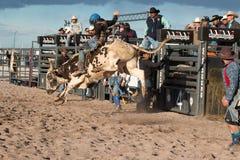 Équitation professionnelle de Taureau de rodéo Images libres de droits