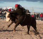 Équitation professionnelle folle de Taureau de rodéo de Taureau Photo libre de droits