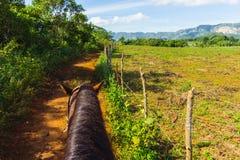 Équitation sur le Cuba Ville de tabac de Vinales photo stock
