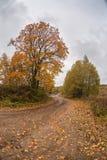 Érable énorme d'automne photographie stock libre de droits