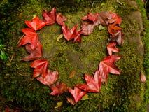 Érable dans l'amour au dueng de kra de phu Photographie stock libre de droits