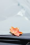 érable de lame d'automne Photos libres de droits