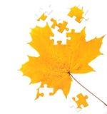 érable de lame d'automne Image libre de droits