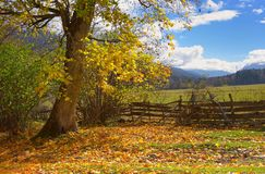 Érable en montagnes Images libres de droits