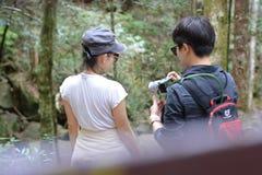 Érable, feuille, Phukradueng, Loei Photographie stock libre de droits