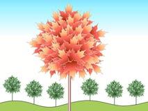 Érable illustré d'automne Image libre de droits