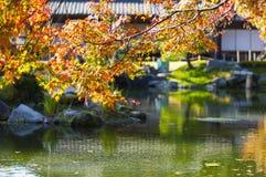 Érable japonais au-dessus d'étang Photographie stock