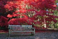 Érable japonais et banc Image libre de droits