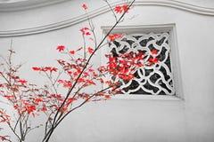 Érable rouge Photographie stock libre de droits