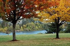 Érables d'automne Image libre de droits