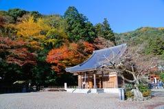 Érables japonais avec un temple. Photos libres de droits