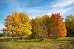 Érables oranges d'automne contre un ciel bleu avec des nuages photos libres de droits