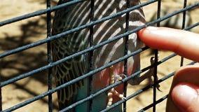 Éraflure d'un ventre d'oiseaux Photos libres de droits