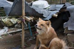 Éraflure de chien photographie stock