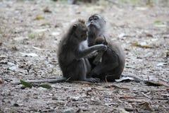 Éraflure un autre de singe Images libres de droits