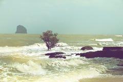 Érosion des plages, arbres dans le ressac photo stock
