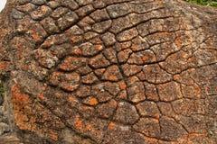 Érosion dispersée de roche, parc national de Matopos, Zimbabwe photographie stock