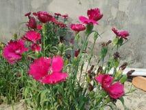 Ésta es imágenes de una flor Foto de archivo libre de regalías