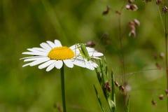 Ésta es mi flor Fotos de archivo