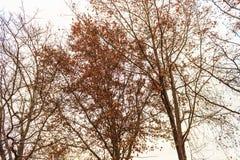 Ésta es tal vista de los árboles de hojas caducas en invierno temprano fotos de archivo libres de regalías
