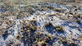Éstas son realmente pequeñas plantas minúsculas tiradas desde arriba Mientras que el sol fijaba, echó sombras alargadas largas en fotografía de archivo libre de regalías