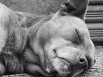 Éste es mi perro marrón Fotografía de archivo libre de regalías