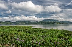 Éste es país de Daklak-a de los elefantes y de las cascadas, una provincia en el centro de Vietnam montañoso imagen de archivo libre de regalías