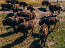 Été aérien de la Pologne de palais de Kurozweki Bisons sur le champ photo stock