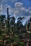 Été cassé de forêt Photos libres de droits
