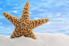 Été d'étoiles de mer photo stock