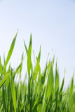 été d'herbe Photo stock
