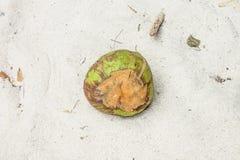 été d'horizontal de noix de coco de plage Image libre de droits