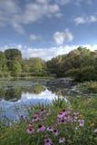 Été dans Central Park par l'étang avec des fleurs Photographie stock